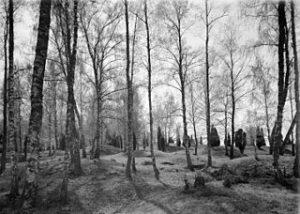 Viking gravesites