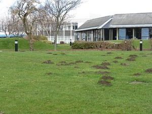 Mole Hills in a Lawn