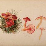 Beatrix Potter Mycology