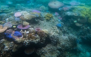picture of healthy coral and bleached coral