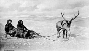 Caribou pulling 2-person sled