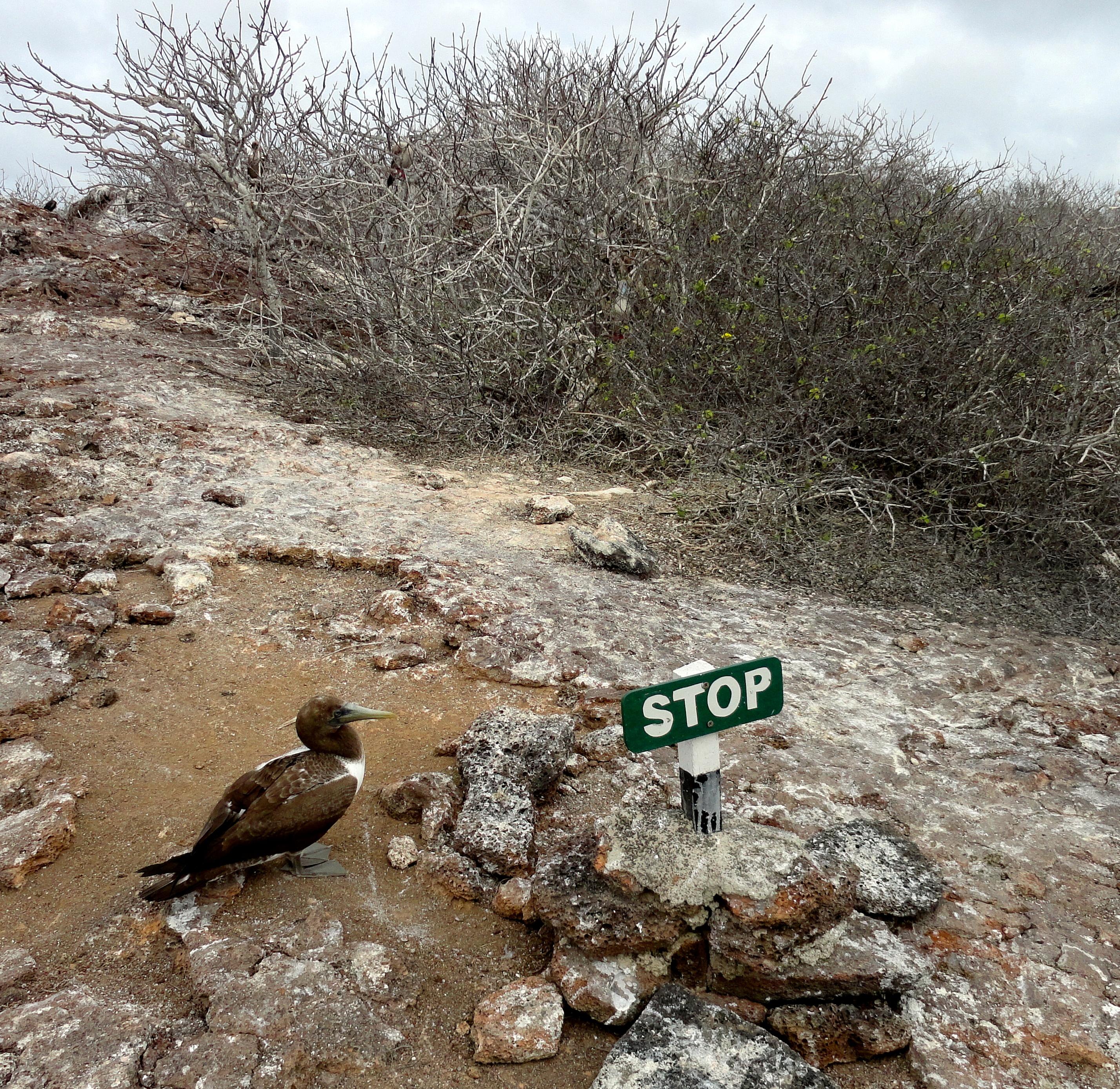 Exploring Genovesa Island, Galapagos