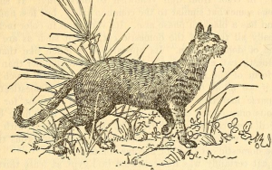 Egyptianhuntingcat