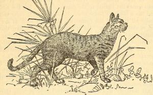 Egyptianhuntingcat