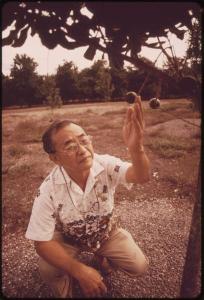 Hiroshi Ooka inspecting harvesting net