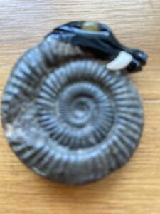 Ammonite Fossil with jet head