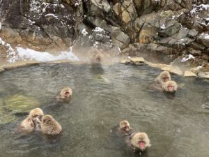 snow monkeys in hot spring