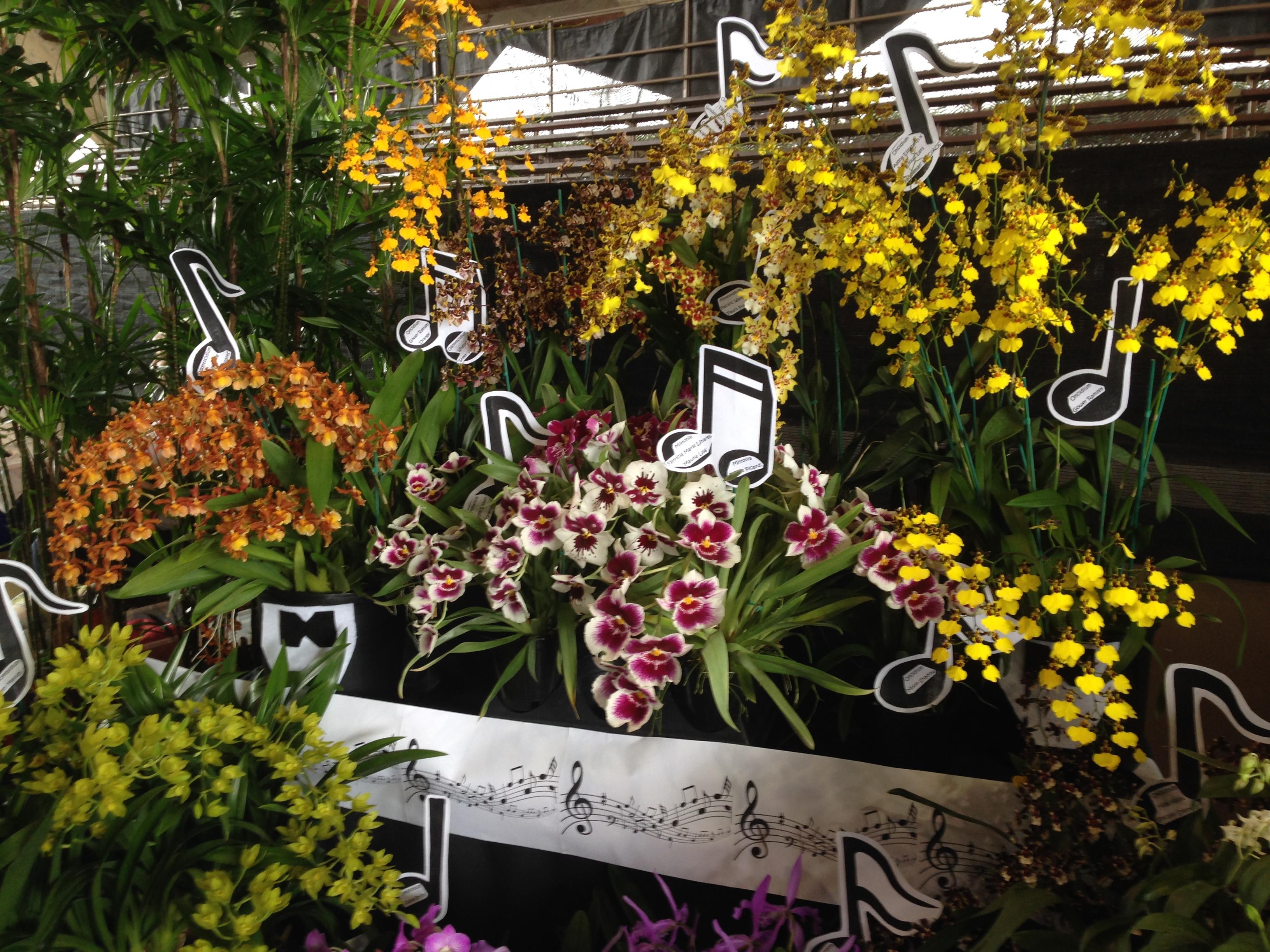 Orchids Flower Flowers