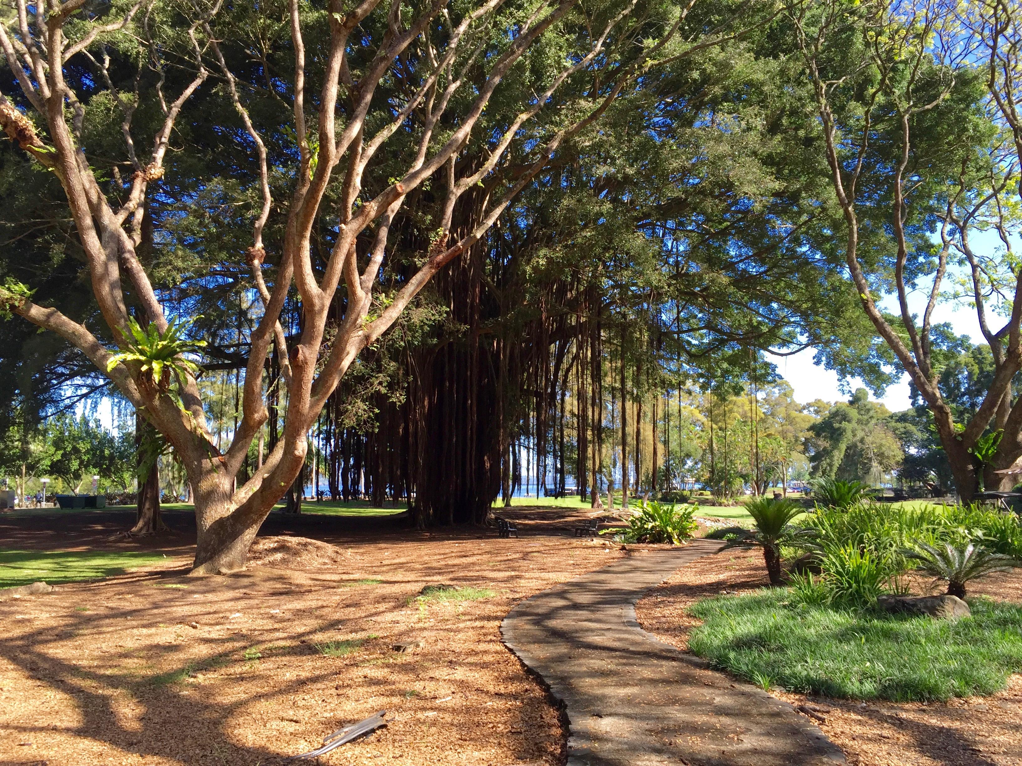 Liliuokalani Gardens: An Oasis in Time | Sandra Wagner-Wright