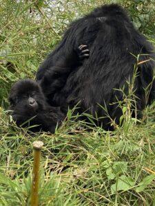 Infant on mother's back