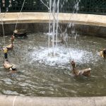 Peterhof Gardens mechanical duck pond w sound from chasing dog