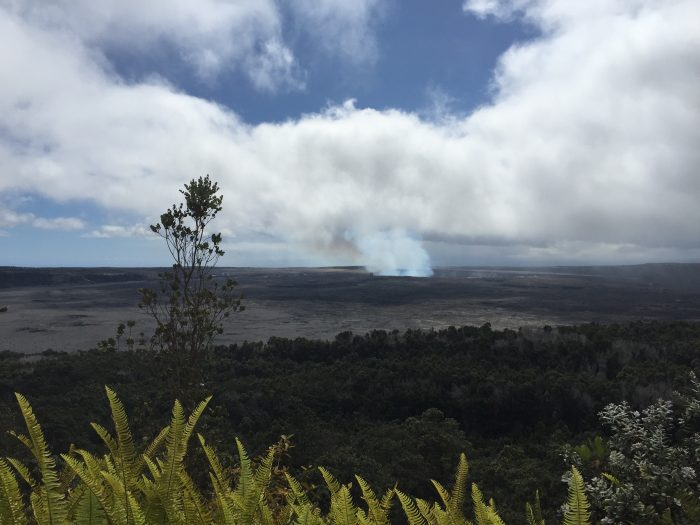 `Ōhi1a tree by steam vent at Kīlauea