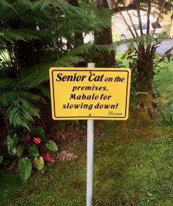Drive Slowly, Senior Cat