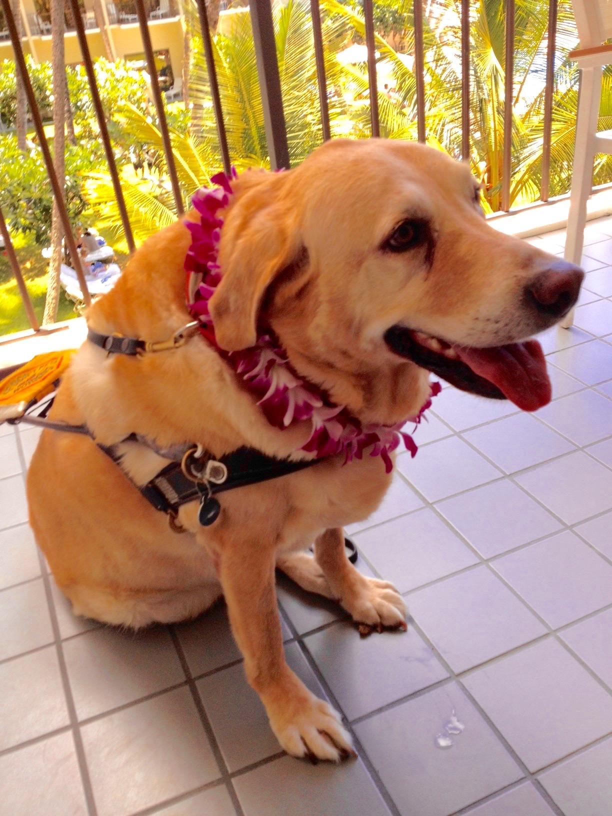 Retired Guide Dog Spencer McGarrett – A Remembrance