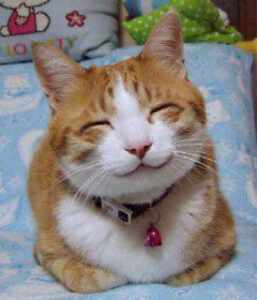 Cat with closed eyes & upturned mouth